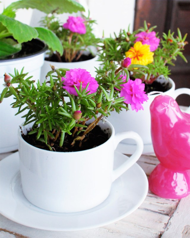 flowers in coffee mugs
