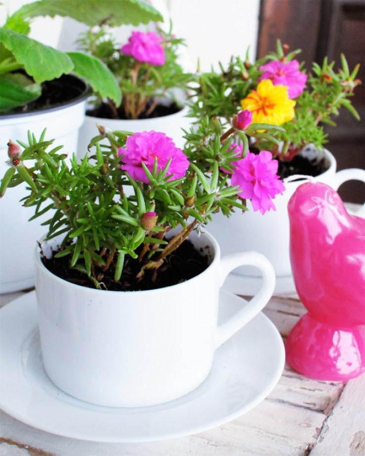 flowers in coffee mugs