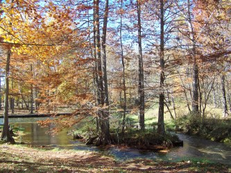 We love the colors of autumn. We have traveled to many different places to see autumn colors, but the colors at Meramec Springs, within twenty miles from our home, are some of the best in the country.