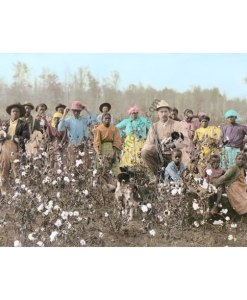 Cotton Plantation Planters & Pickers, 1908