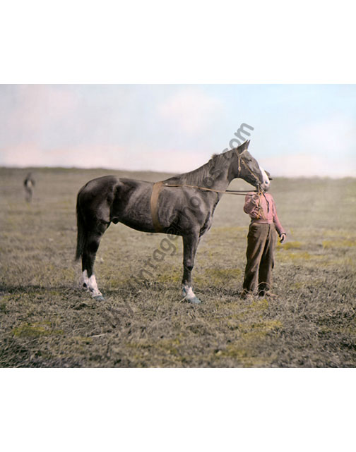 Old Baldy, General George Meade's Horse