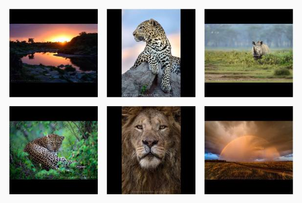 David Lloyd - Wildlife Photography 2