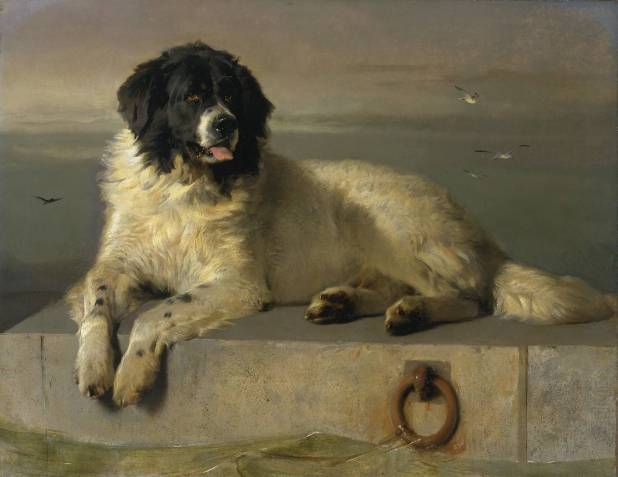 A Distinguished Member of the Humane Society exhibited 1838 by Sir Edwin Henry Landseer 1802-1873