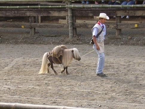 Breeders: Falabella Miniature Horse Association