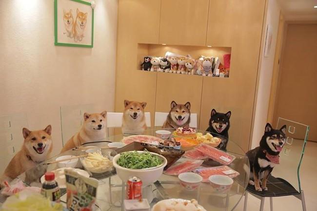 The Shiba Inu family