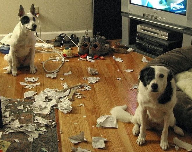 Guilty dogs compilation of 2015