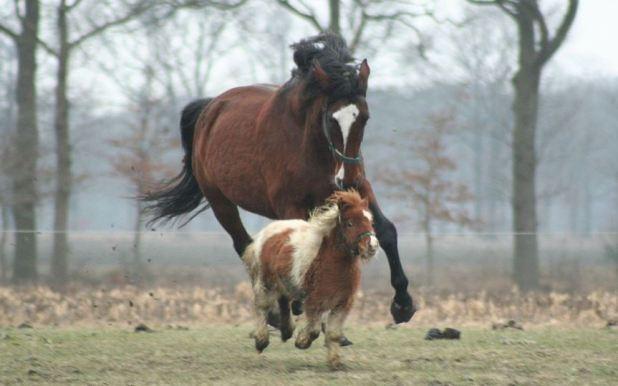 videos divertidos de caballos 3.JPG