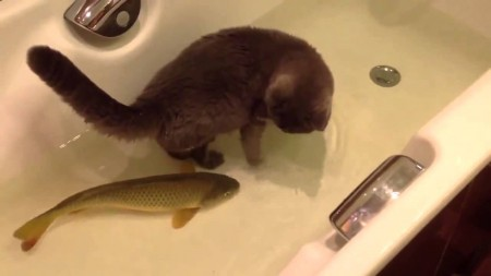 Who said cats can't be friends with fish?