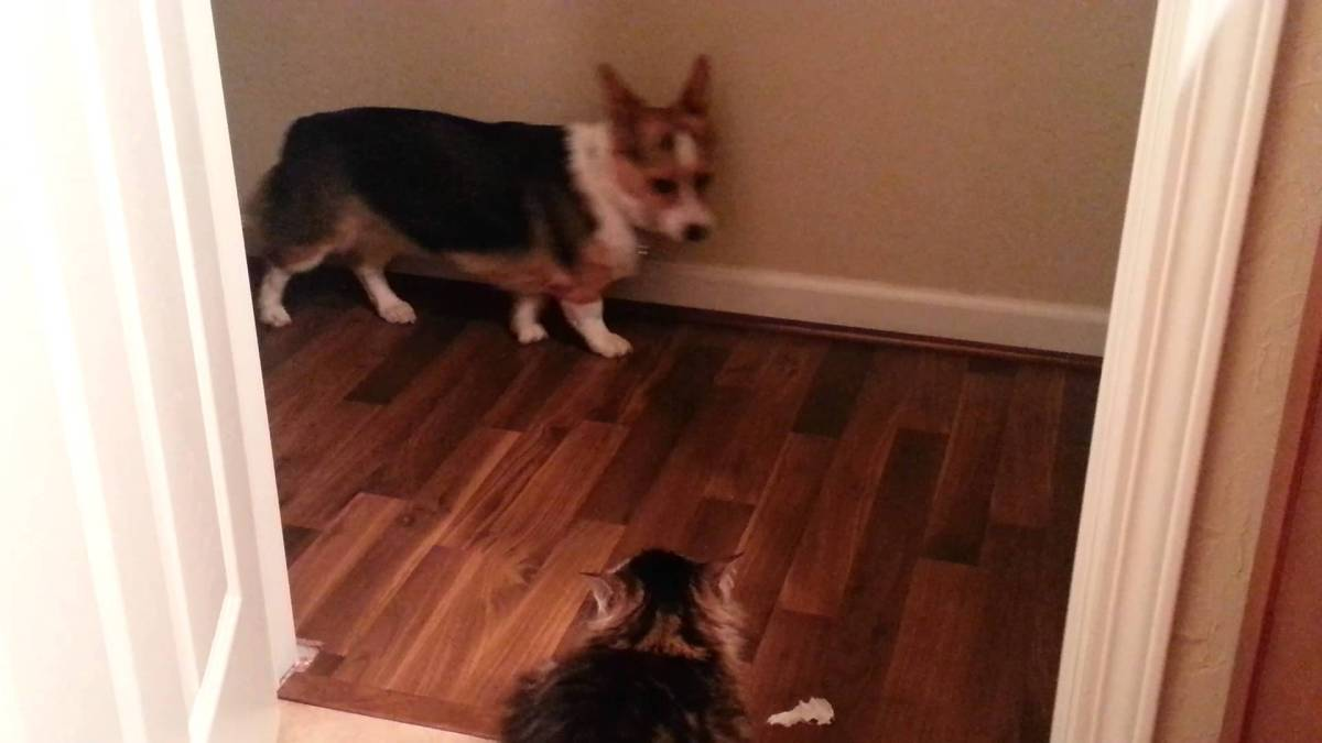 This dogs afraid of cats video compilation is just too funny!