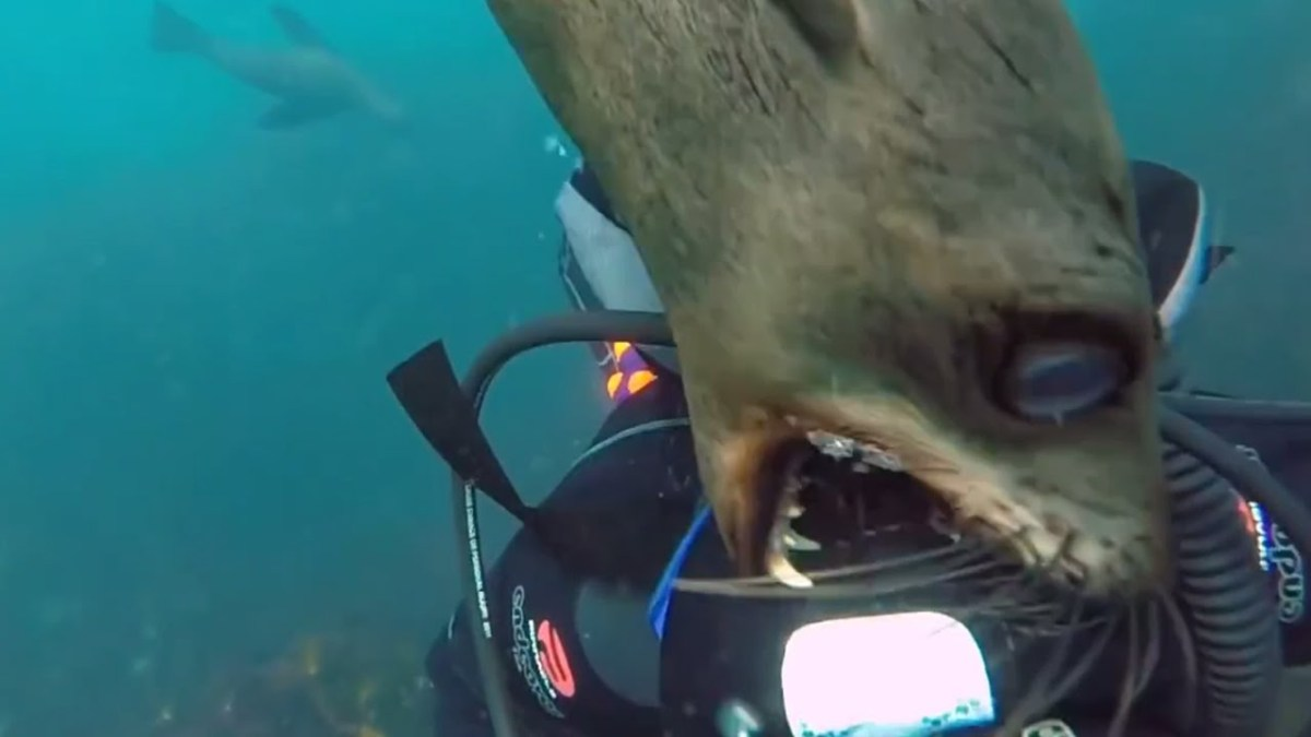 Most shocking videos of water animals chasing and attacking humans
