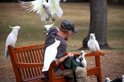 This woman feeding wild cockatoos will make you want to travel to Australia!