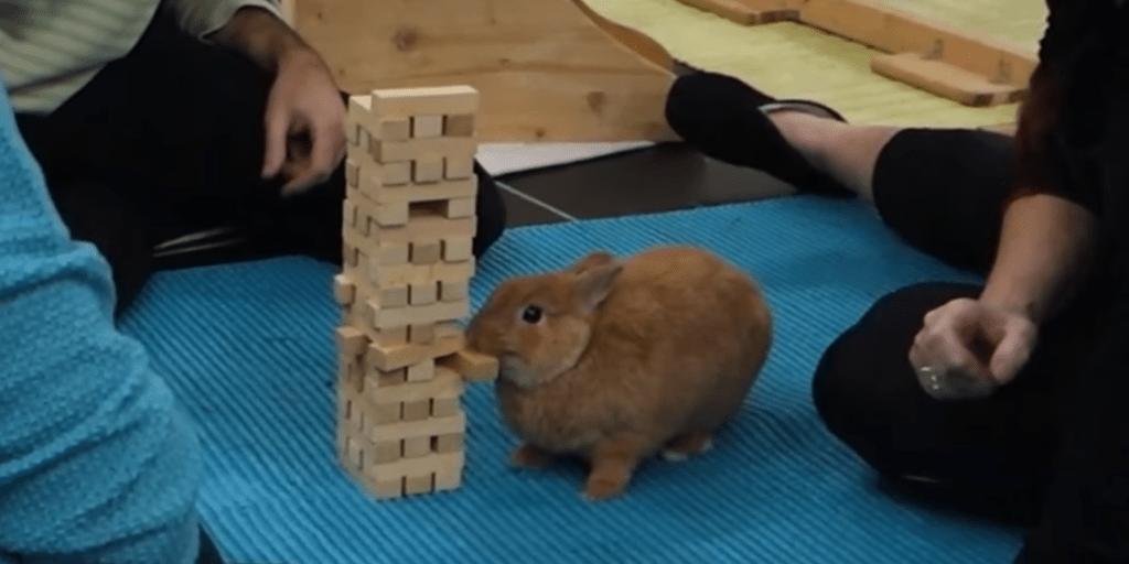Bunny Plays Jenga Like A Pro