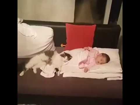 Cat Refuses To Be Apart From Newborn Baby