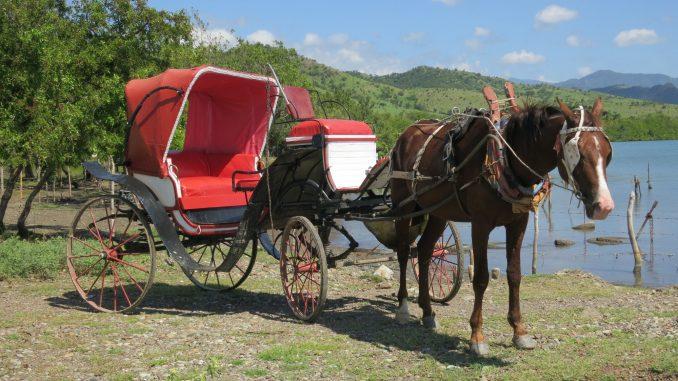 Horse and Buggy rides at Maria del Portillo