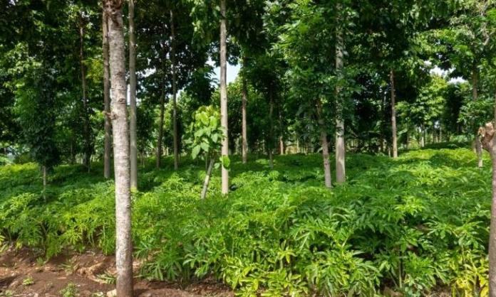 agroforestry: an under-stated game changer?
