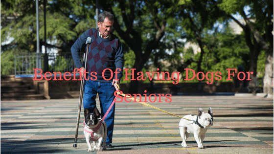 Benefits Of Dogs For Seniors