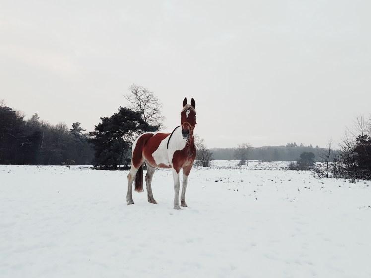 Pony met buikpijn :(