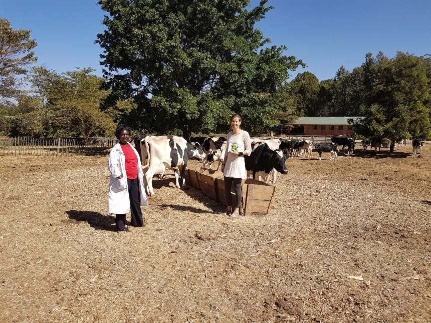 Koeien Kenia