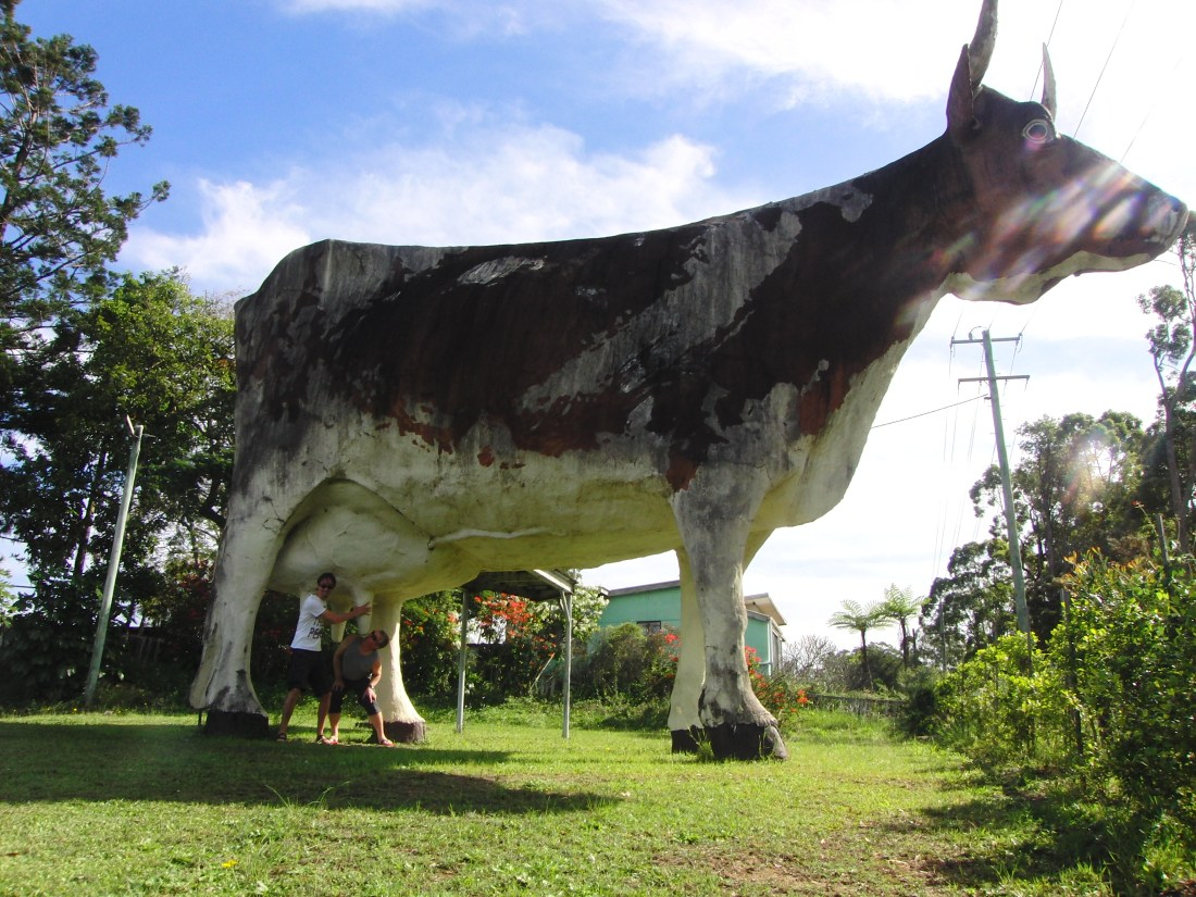 The Big Cow Queensland Australië