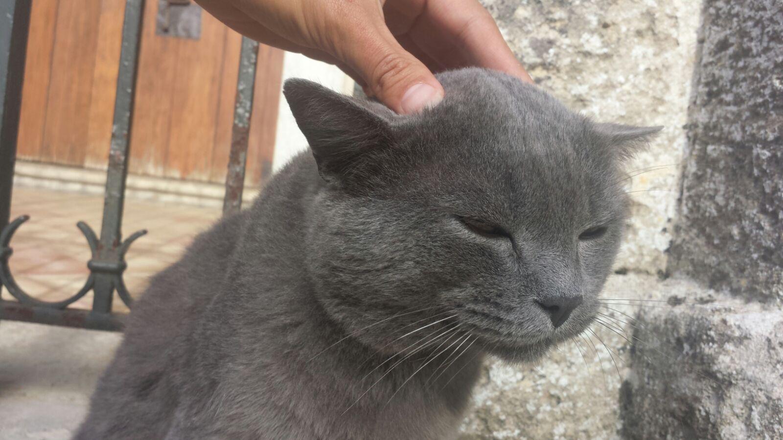 Stress winterdip kat