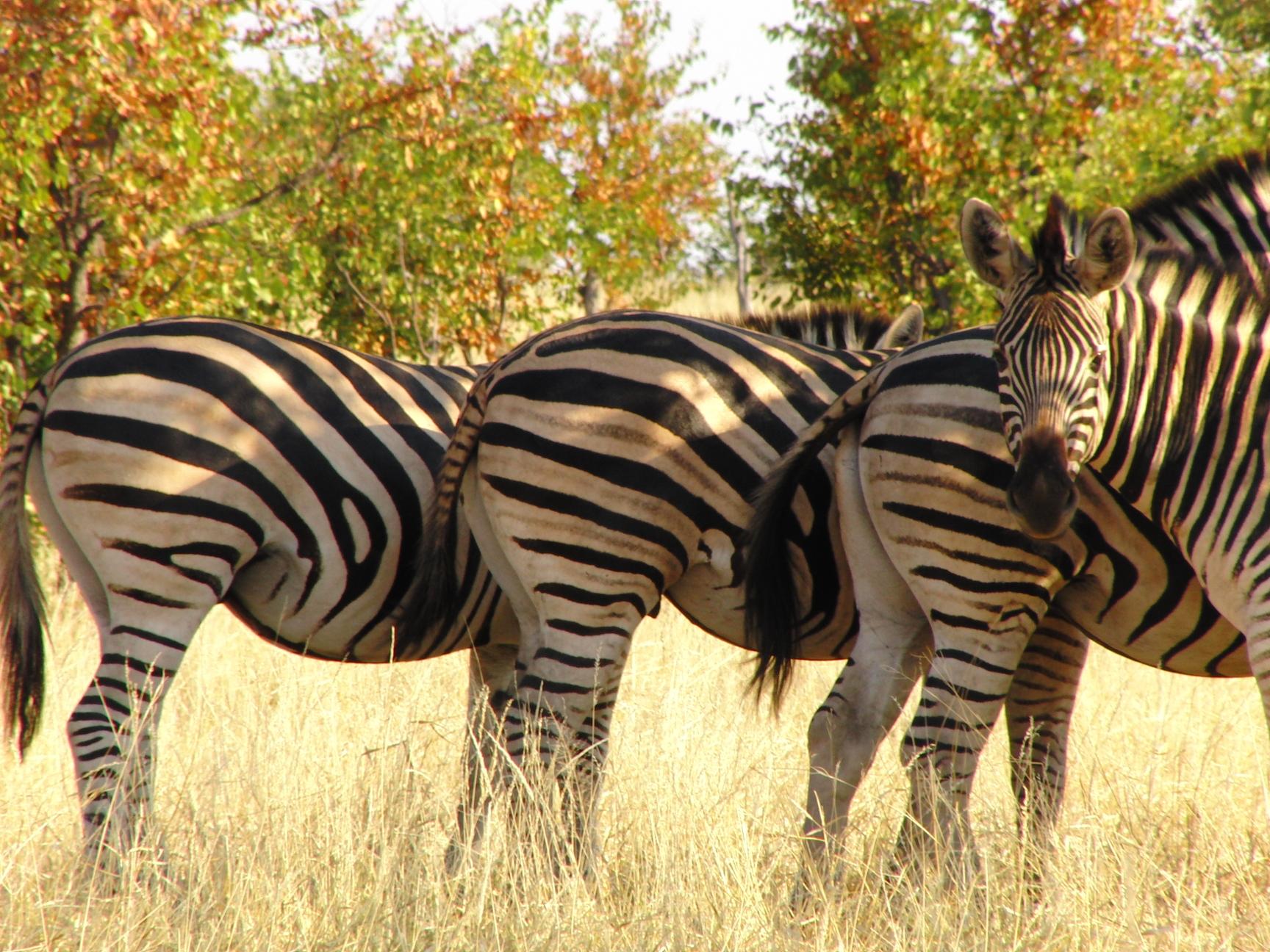 De 5 beste parken om wild te spotten in Zuid Afrika