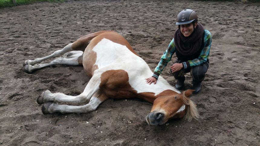 Mijn paard in slaap gehypnotiseerd