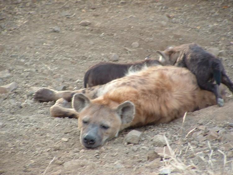 kruger-national-park-61 zuid afrika