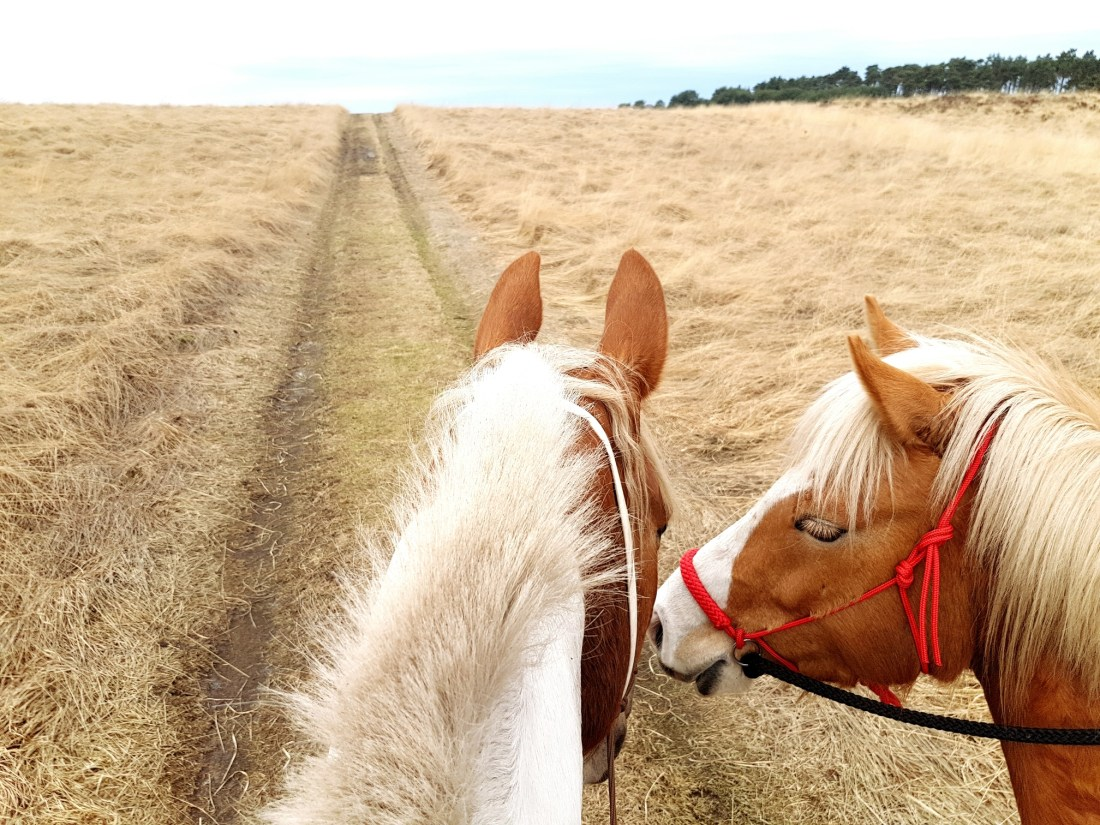 Rondje Veluwe nationaal park paardrijden