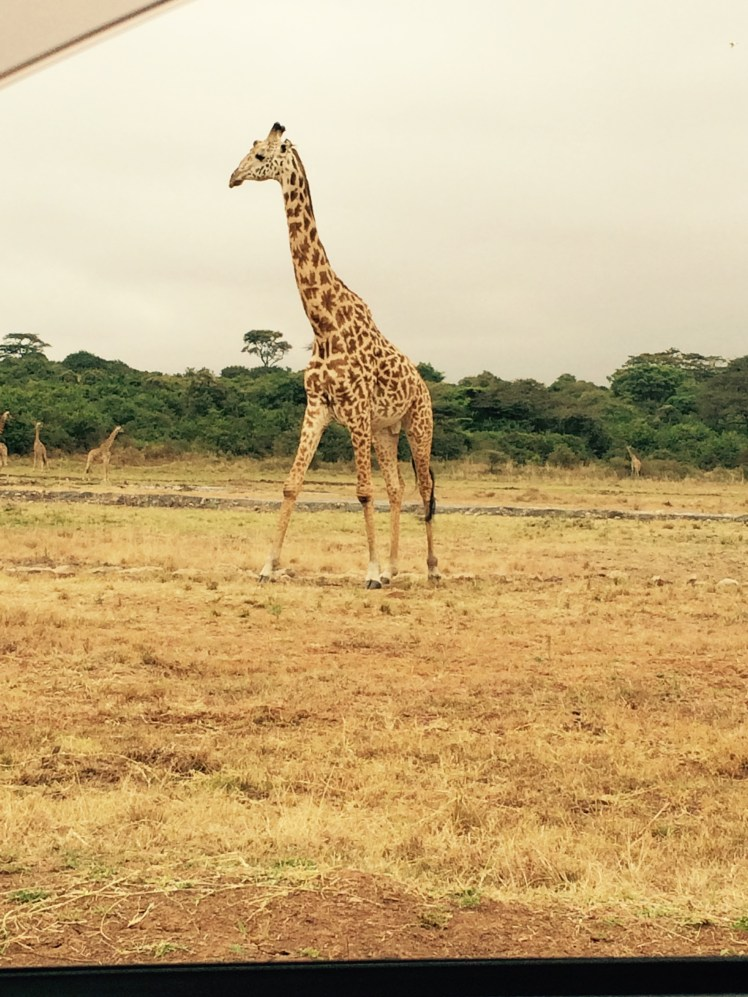 Giraffe Nairobi National Park Kenia