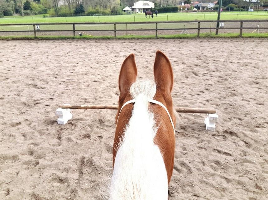 Afgeleid paard