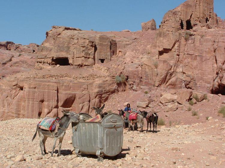 Petra Jordanië ezeltjes brooke hospital