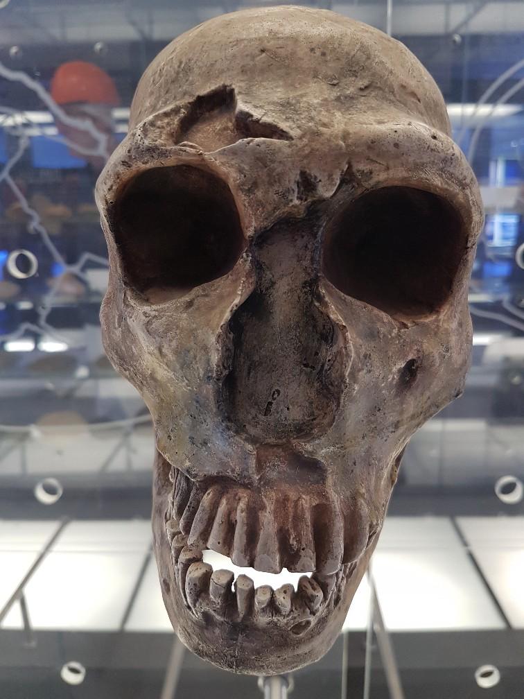 Cradle of Humankind grotten Zuid Afrika