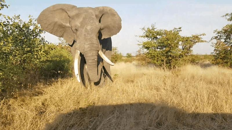 Olifant valt auto aan Zuid Afrika