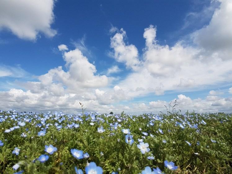 Mooie bloemetjesvelden in Zeeland