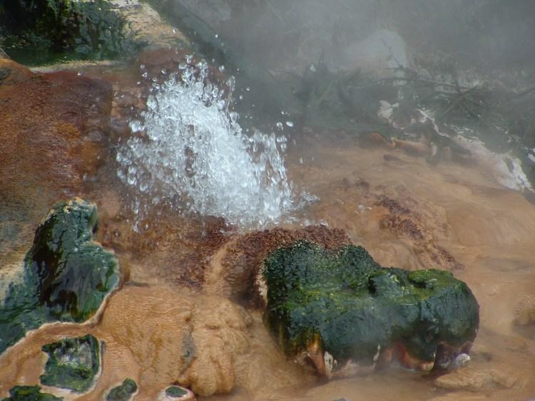 322-Clamshell spring Nieuw Zeeland