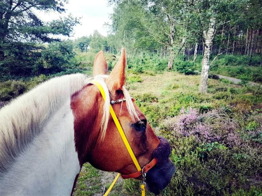 paard hei gallop