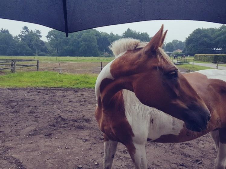 Paard paraplu regen