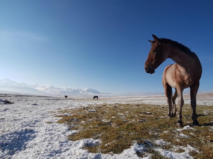 Kirgizië bergen kamperen tent paard sneeuw