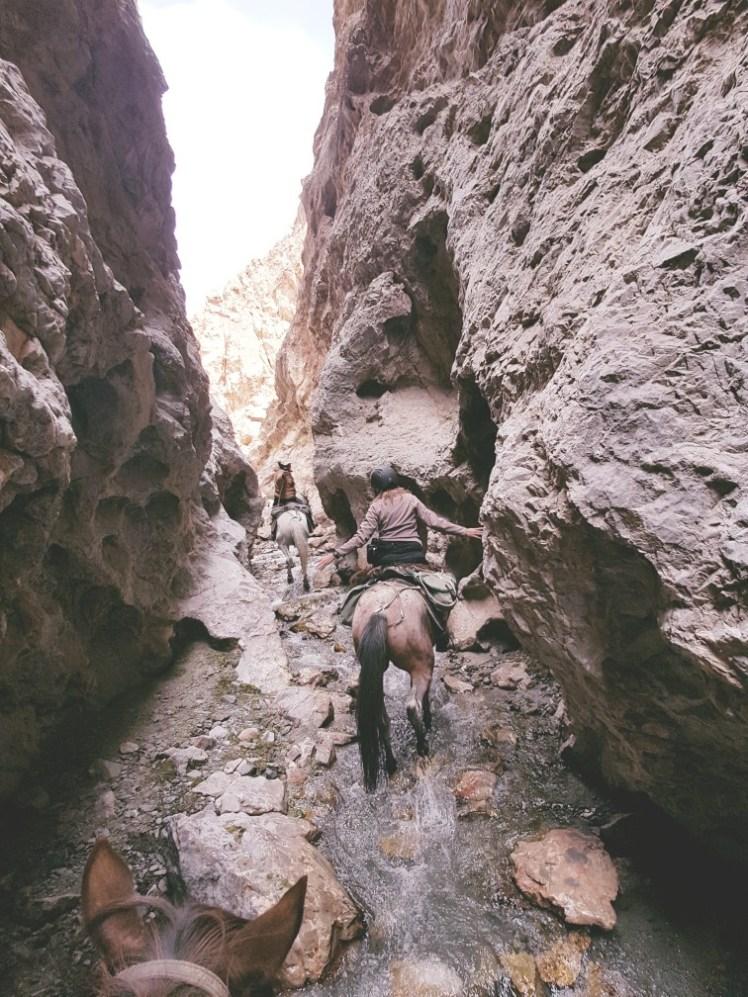 Kirgizië bergen kamperen tent paard trektocht