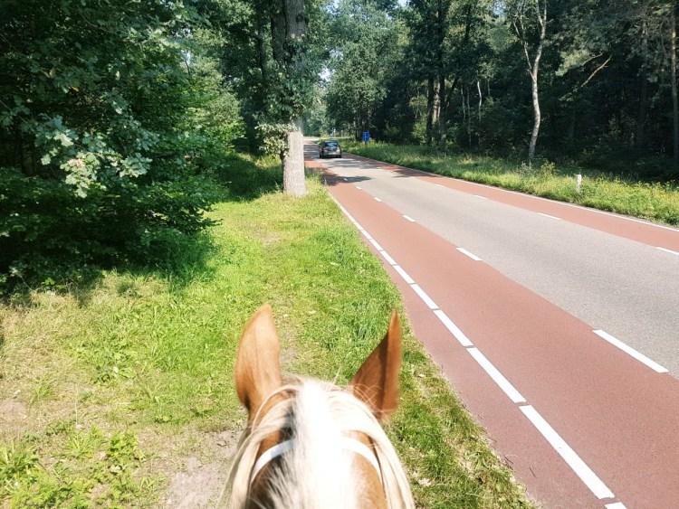 paard weg buitenrit