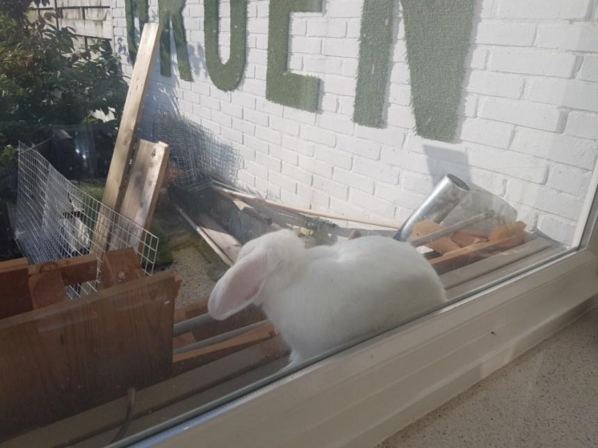 Konijn in de vensterbank