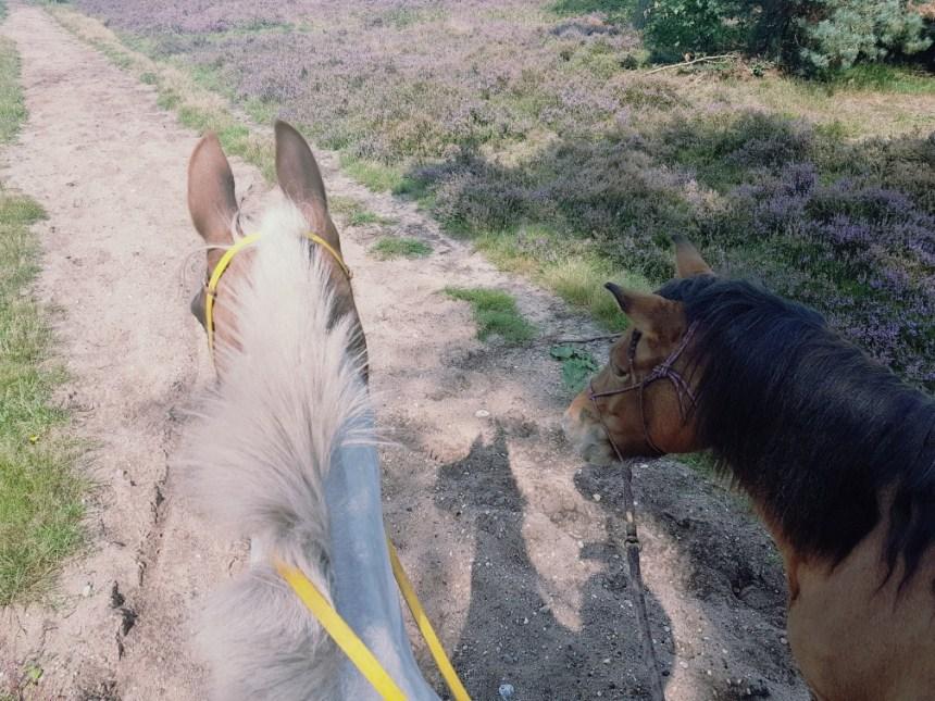 handpaarden