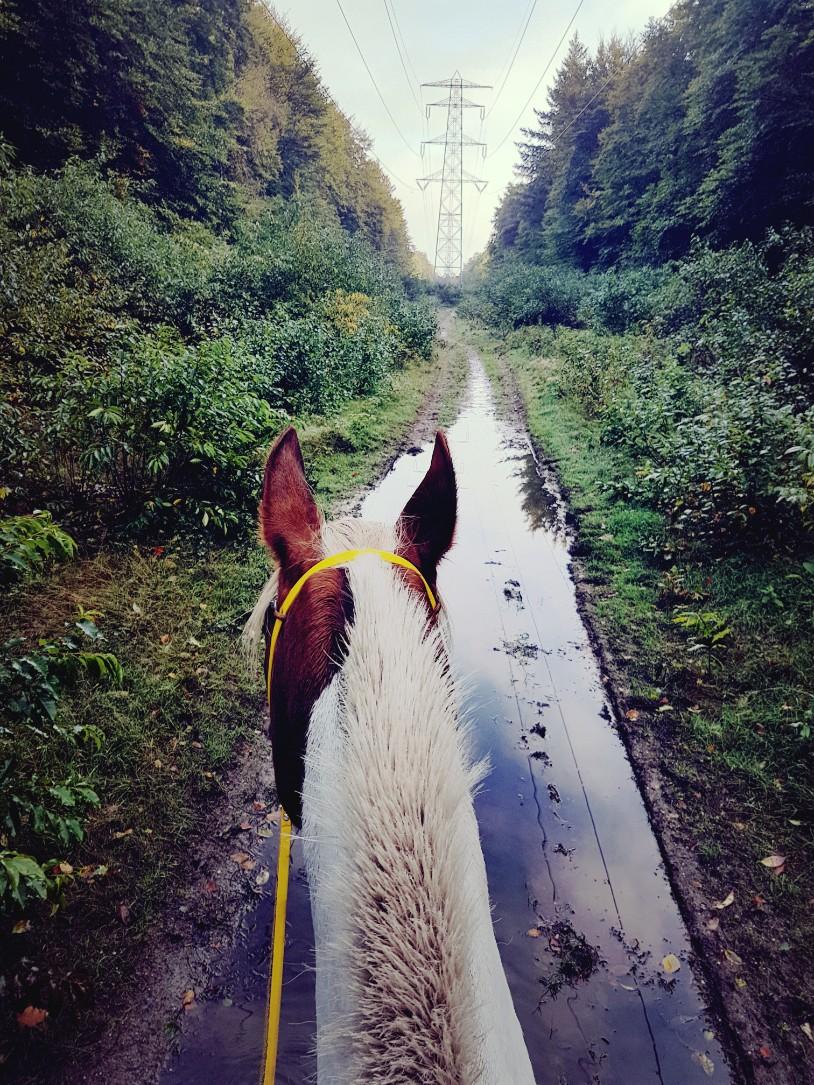 met je paard door de plassen