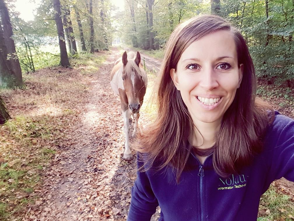 paard in vrijheid