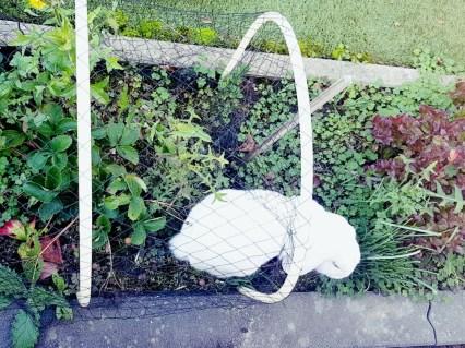 wit konijn in aardbeienveld