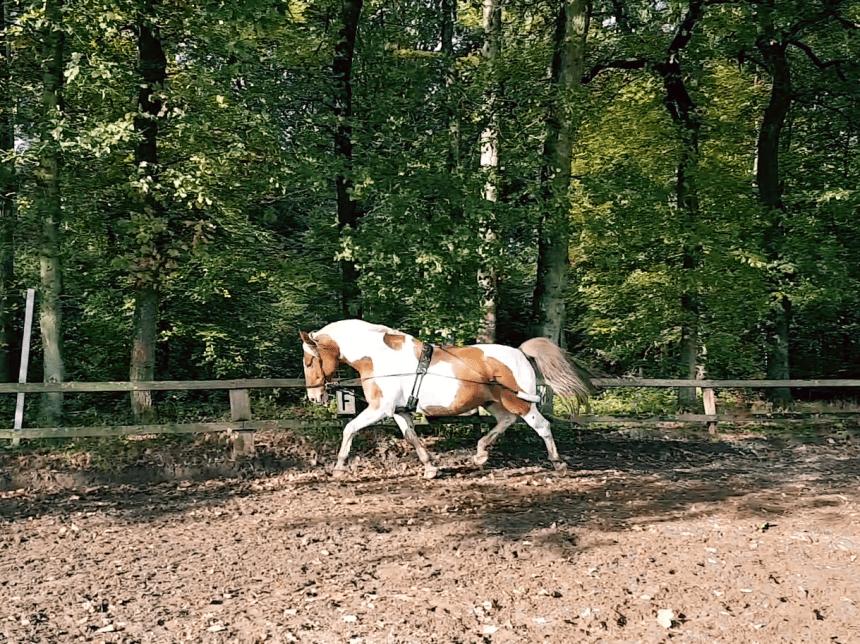 Paardrijden longeren