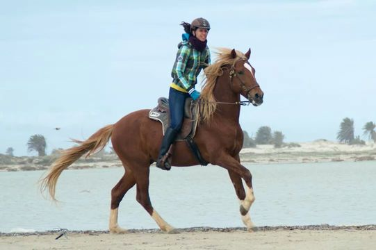 Review; paardrijden Tunesië, Djerba (meerdaagse vaste standplaats)