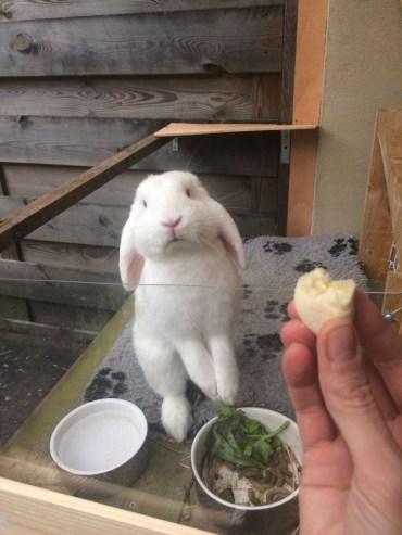 konijn eet banaan