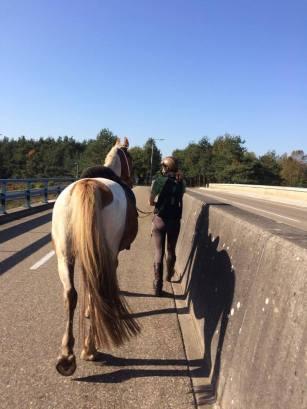 paardrijden viaduct oversteken snelweg