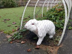 wit konijn sloopt net aardbeien